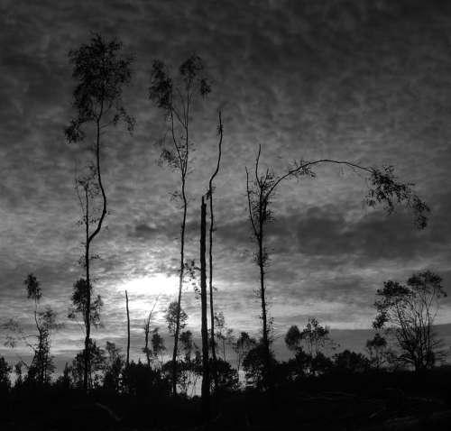 hutan kelam